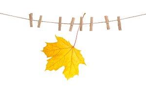 Autumn maple leaf on clothes line