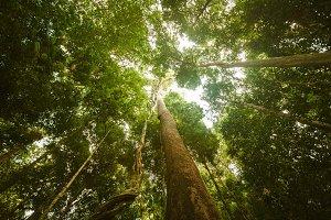 Jungle forest. Beauty nature landscape background