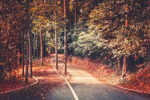 Autumn park road background. Beautiful landscape