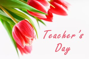 Happy teachers day with tulip flower, message for teacher in special day of education, tulip bouquet.