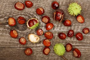 chestnut isolated on old wooden background. Top view