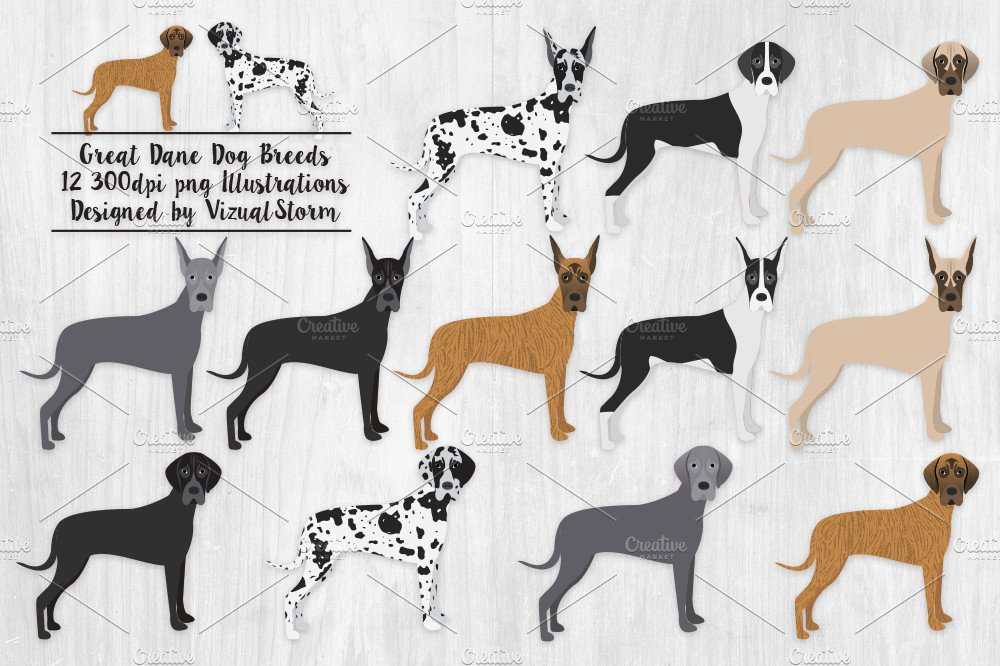 Breeds Of Dogs Beginning With Z