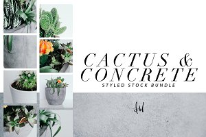 Cactus & Concrete - Styled Bundle