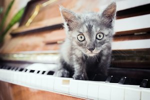 kitten sitting on keys of the piano
