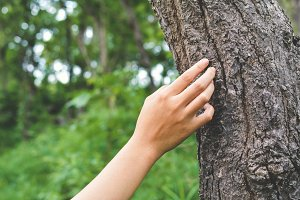 female hand touching a tree