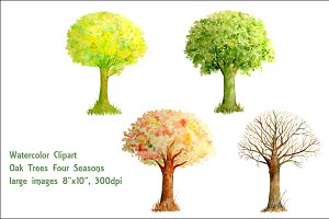 Watercolor Oak Tree Four Seasons