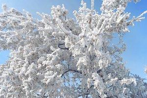 Frozen tree 1