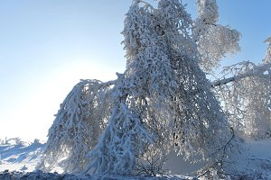Frozen tree 2