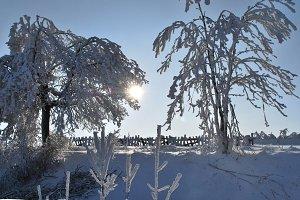 Frozen tree 3