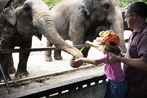 Girl feeding elephant at the zoo