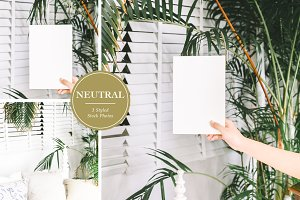 Neutral Tropical Styled Stock Photos