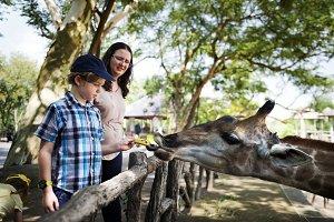 Young boy feeding giraffe at the zoo