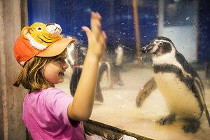 Girl watching penguin aquarium