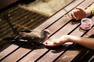 Feeding the bird