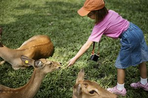 Girl feeding the deers at the zoo