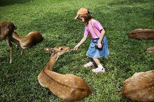 girl feeding deer at the zoo