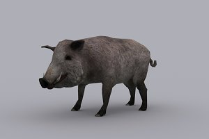 BOAR with Native File