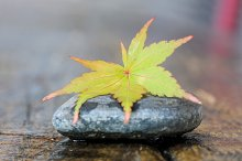 autumn leaf on stone
