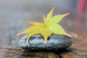 autumn leaf on stone