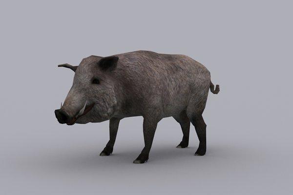 3D Animals: PROTOFACTOR  - BOAR fbx only