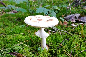 Mushrooms are grown in warm green, thick, wet moss layer.
