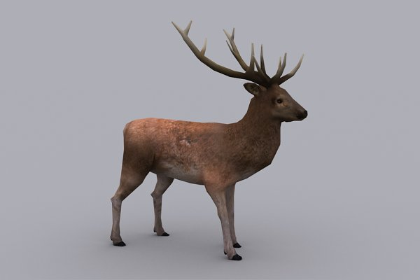 Animal: PROTOFACTOR  - STAG with Native File