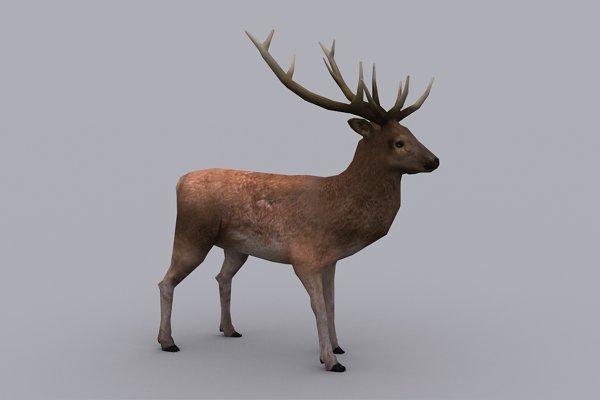 3D Animal Models: PROTOFACTOR  - STAG fbx only