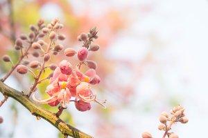 blossom daisy flowers
