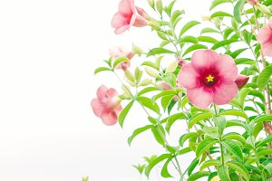 pink flower plant nature in the day
