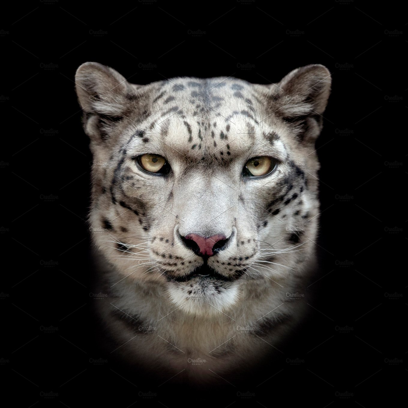 how to buy snow leopard