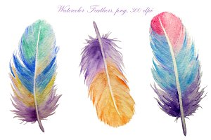 Watercolor Detailed Feathers