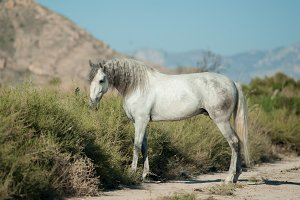 Andalusian horse in preries