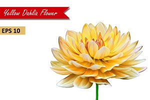 Yellow Orange Dahlia Flower. Vector