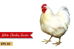 White Chicken side view. Vector