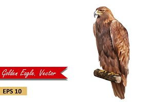 Golden Eagle sitting. Vector
