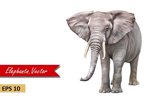 African Elephant front view. Vector