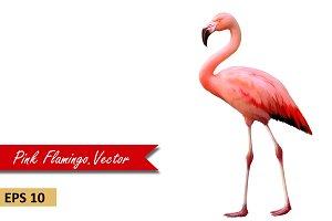 Pink Flamingo standing, Vector