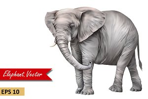 African Elephant side view. Vector