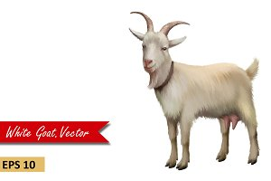 Goat Standing, Front view. Vector