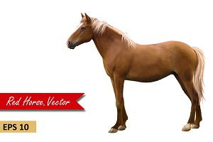 Brown Horse, side view. Vector