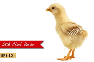 Yellow Chick, side view. Vector
