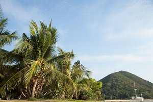 Coconut trees and mountains.