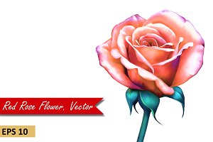 Red Orange Rose with Stem. Vector