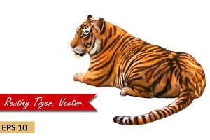 Bengal Tiger resting, laying, Vector