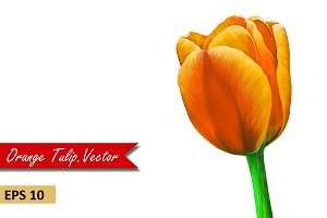 Bright Orange Tulip. Vector
