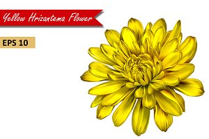 Yellow Chrysanthemum Flower. Vector