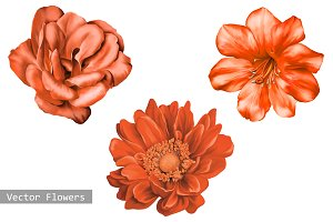 Red Dahlia, Camellia Flower, Vector