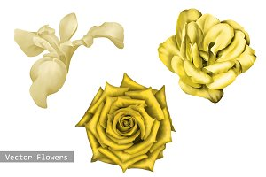 Yellow Flowers: Rose, Camellia, Iris