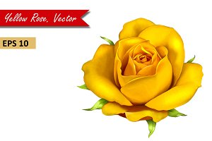 Yellow Rose Flower. Vector