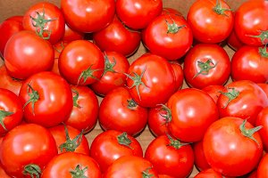 Red ripe tomatoes